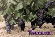 Go to online album of Tuscany